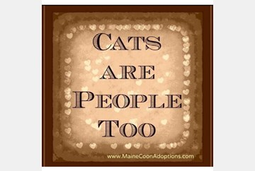 Cats Are People Too!