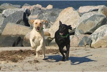 Dogs running on Yorktown Beach