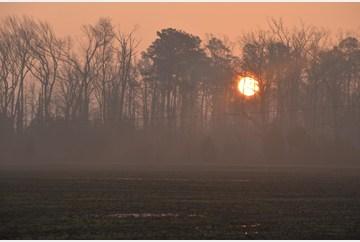 Sunny yet Foggy Morning