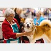 Hampton, dog show, events