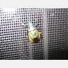 Stink Bug on my Storm Door