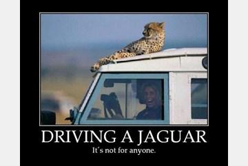Driving a Jaguar